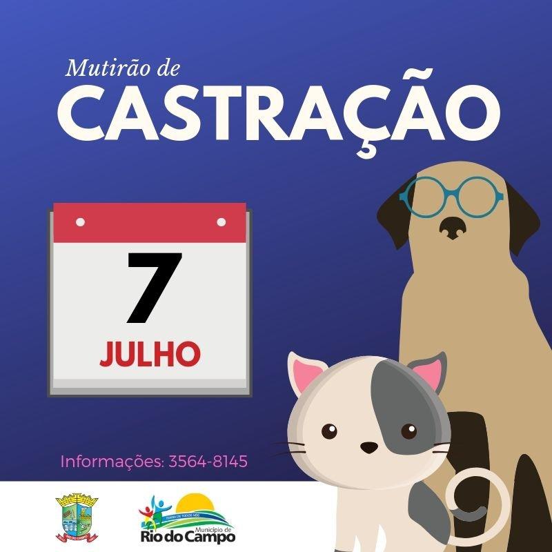 Rio do Campo terá mutirão de castração de cães e gatos