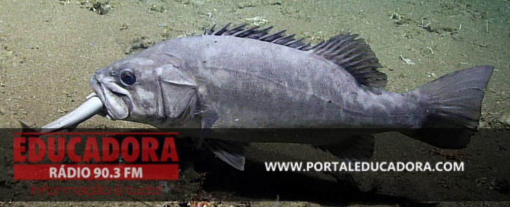 Submarino de cientistas filma um enorme peixe engolindo um tubarão inteiro