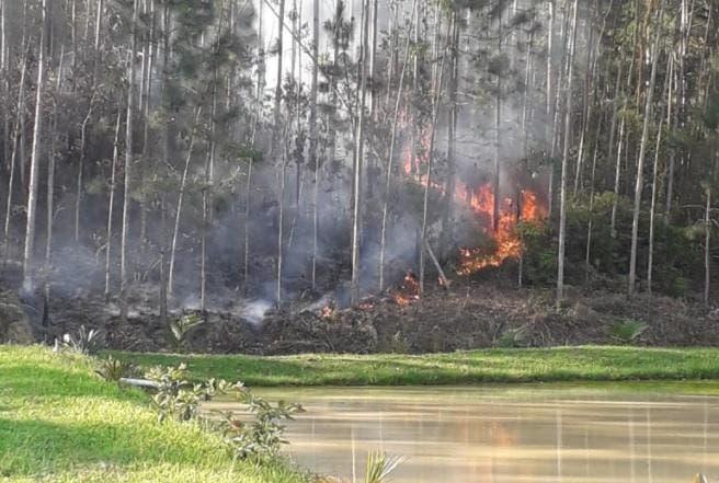 Idoso de 94 anos morre carbonizado durante incêndio florestal no Vale do Itajaí