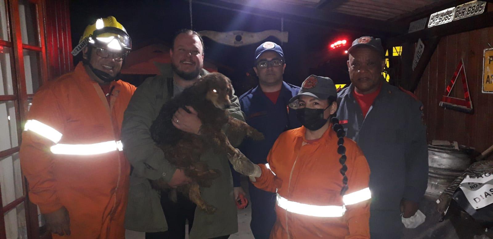 Cachorro soterrado é resgatado pelos bombeiros; veja o momento
